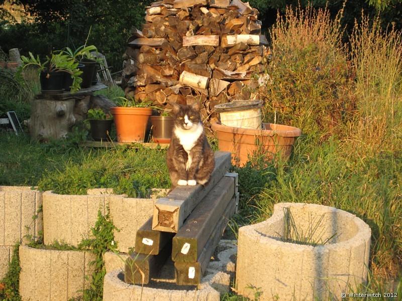 Katze Smilla sitzt im Garten auf einem Holzbalken