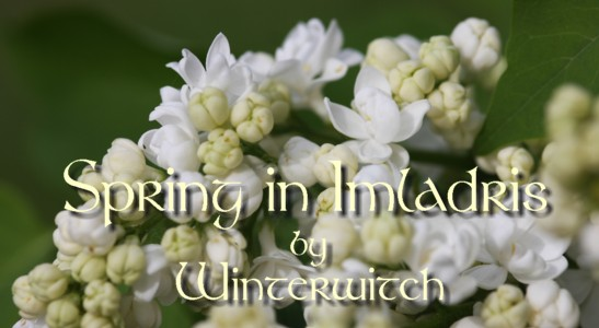 Title banner showing a white lilac opening his buds